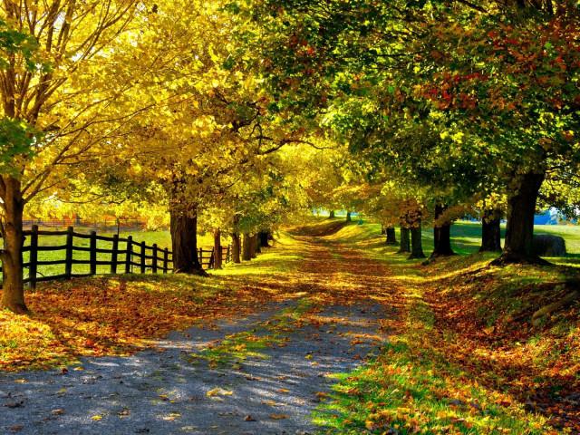 Yellow Autumn Day 壁紙画像