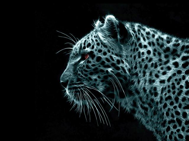 Animal Tiger 壁紙画像