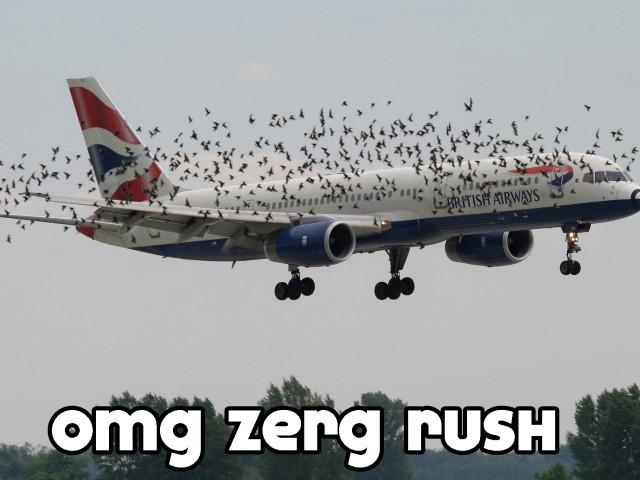 Birds Attack Plane 壁紙画像