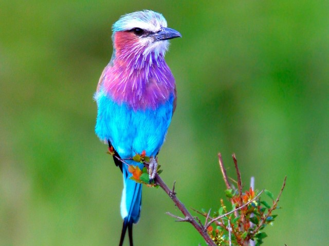 Colorful Bird 壁紙画像