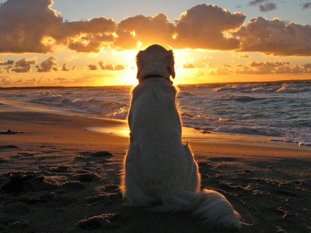 Dog Looking At Beach Sunset 壁紙画像