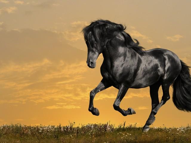 Horse 壁紙画像