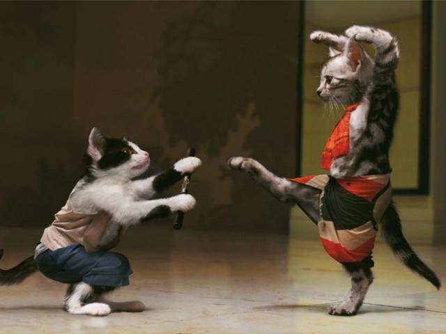 Kung Fu Kittens 壁紙画像