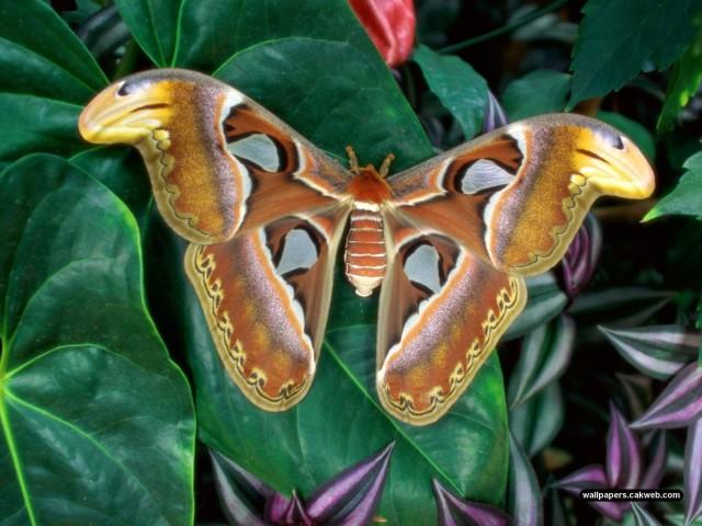 Moth 壁紙画像