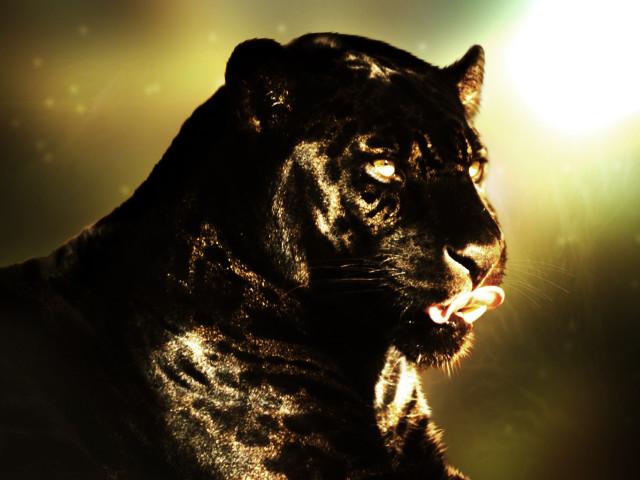 Panther 壁紙画像