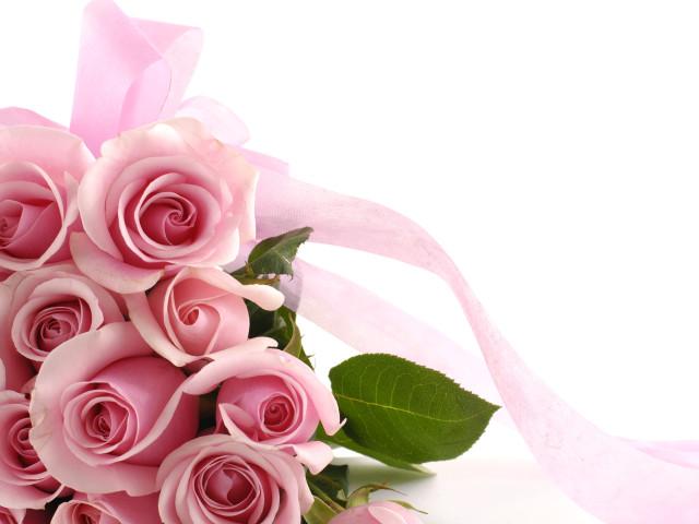 Pink Roses 壁紙画像