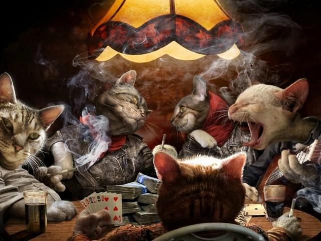 Poker Cats! 壁紙画像