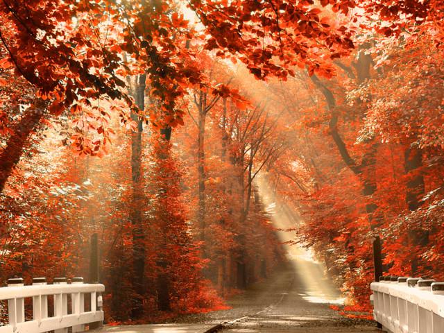 Red Leaves 壁紙画像