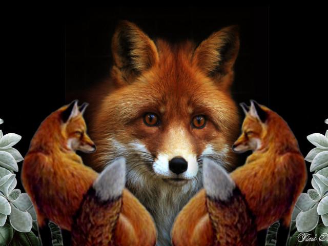 The Fox 壁紙画像