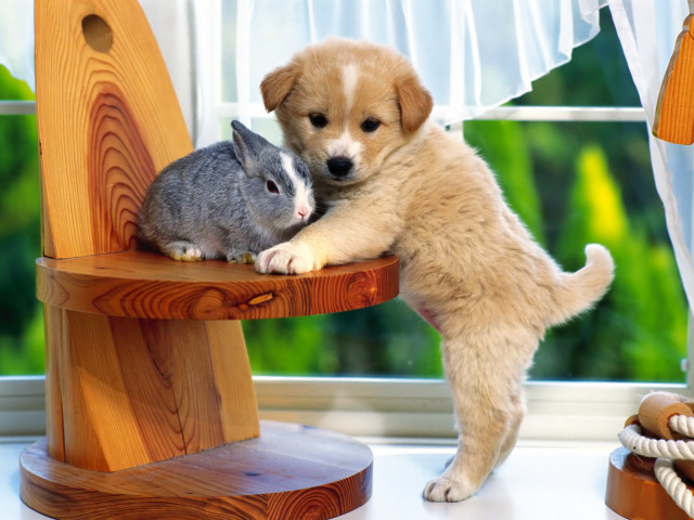 The Puppy And The Rabbit 壁紙画像