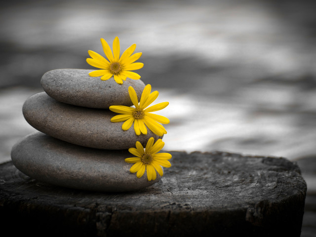 Three Rocks With Yellow Flower 壁紙画像