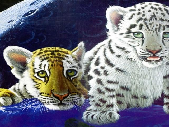 Tiger Brothers 壁紙画像