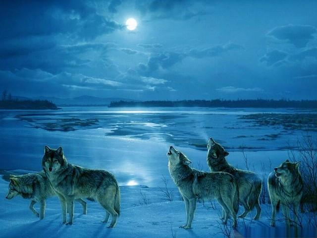 Wolf 壁紙画像