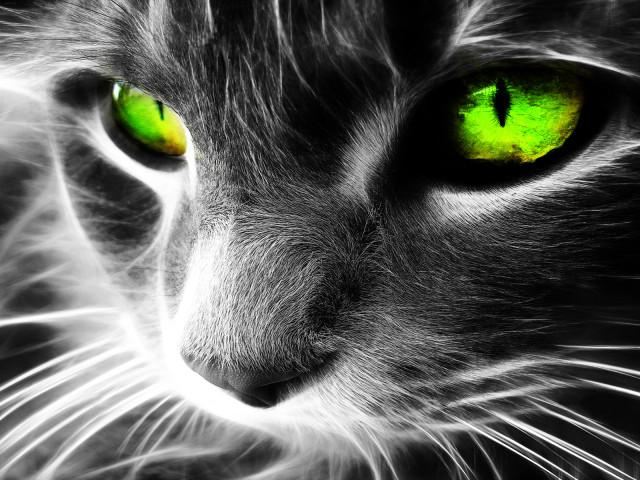 Animal Cat 壁紙画像