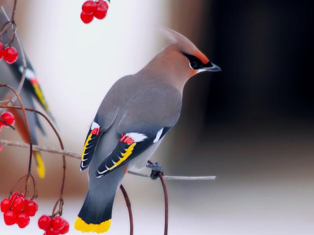 Fondo de pantalla Birds