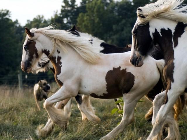 Running Horses 壁紙画像