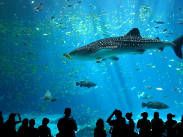 Shark 壁紙画像